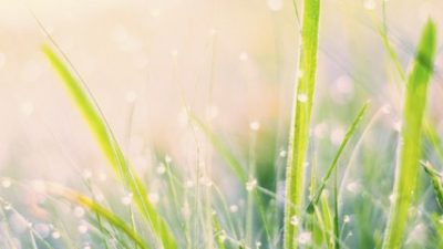 morning-dew-changed-660x240